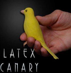 Latex Canary - Magic Latex