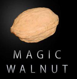 Magic Walnuts - Magic Latex (pair)