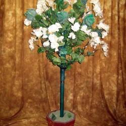Horace Marshall's Blooming Orange Tree