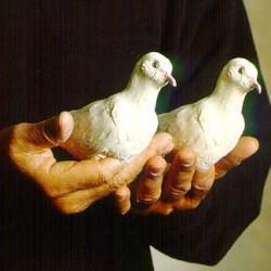 Living Latex Dove - Norm Nielsen