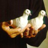 Living Latex Doves (2 Doves) - Nielsen