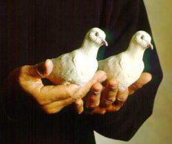 Living Latex Doves (2 Doves) - Nielsen