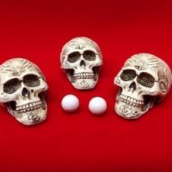 Marie Antionette Skeleton Shells