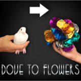 Dove To Flower - Magic Latex