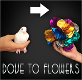 Dove To Flower - Magic Latex