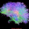 SensiMental - Richard Mark & Marc Salem - Book