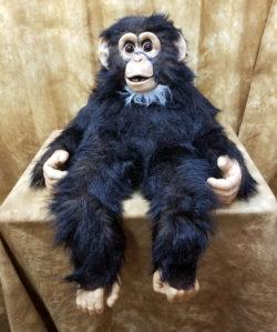 Axtell Chimpanzee